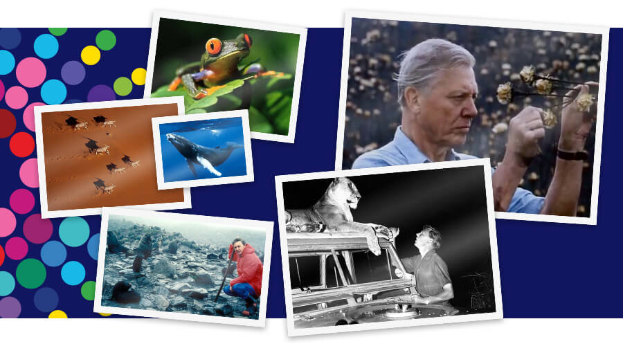 David Attenborough thumbnail image